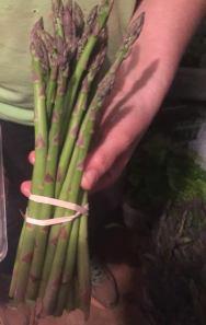 Miller asparagus
