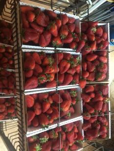 Miller Strawberries